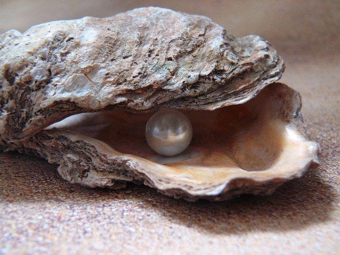 oyster-1327311_960_720.jpg